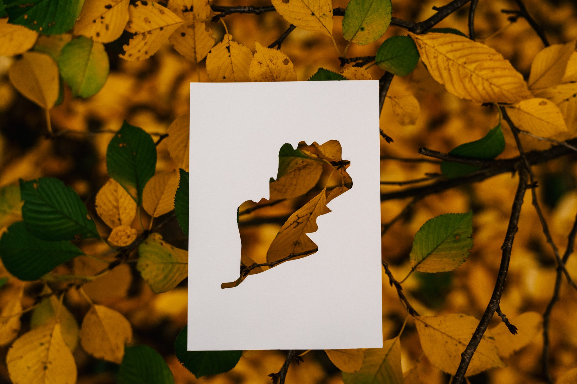 autumn foliage on tree with paper card